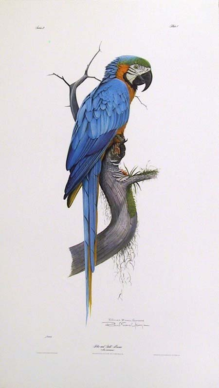 23: Richard Evans Younger, Macaw Parrot, Lithograph