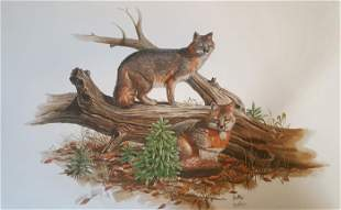 Don Balke, Grey Fox, Lithograph