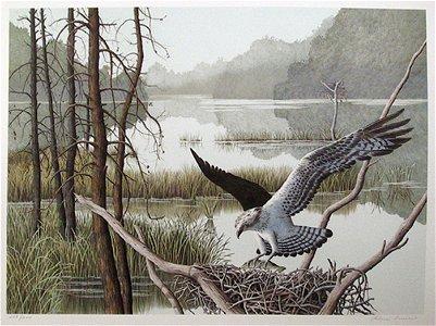 Helen Rundell, Osprey, Lithograph