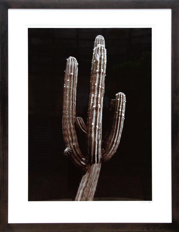 202: Jonathan Singer, Saguaro Cactus, Photograph