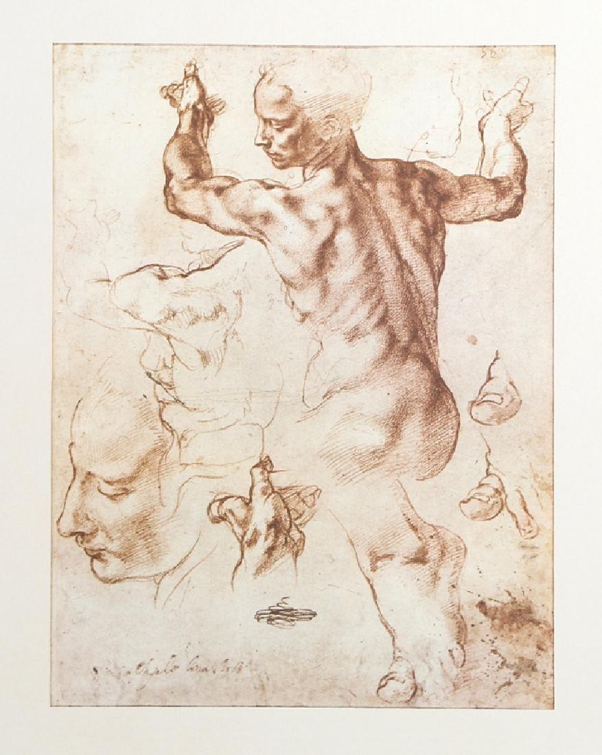 Michelangelo, Studi per la Sibilla Libica from Disegni