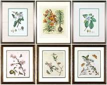31 Botanical Prints late 19th early 20th Century s