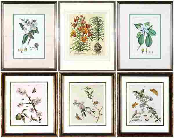 31: Botanical Prints (late 19th/ early 20th Century) (s