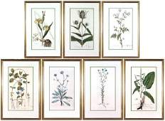 32: Botanical Prints (late 19th/ early 20th Century) (s