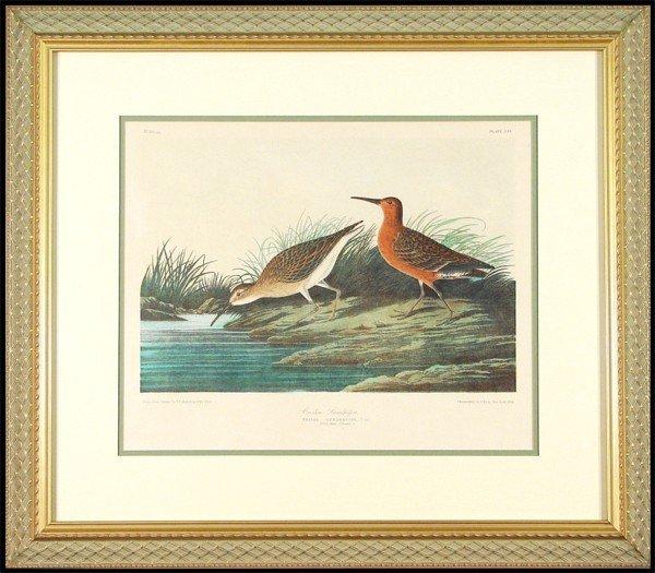 18: James James Audubon (1785-1851) American