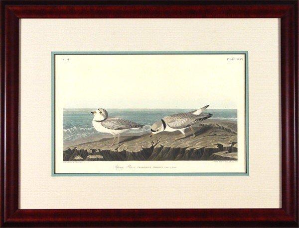 20: James James Audubon (1785-1851) American