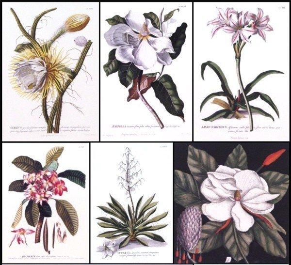 43: Botanical Prints (20th Century) (twenty-three)