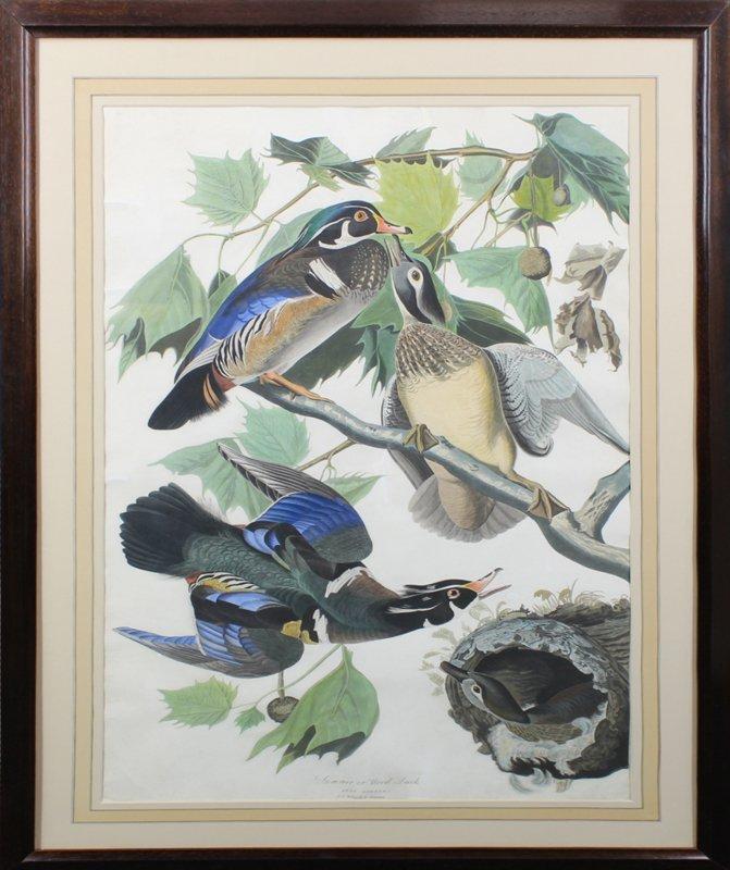 after John James Audubon (1785-1851) New York