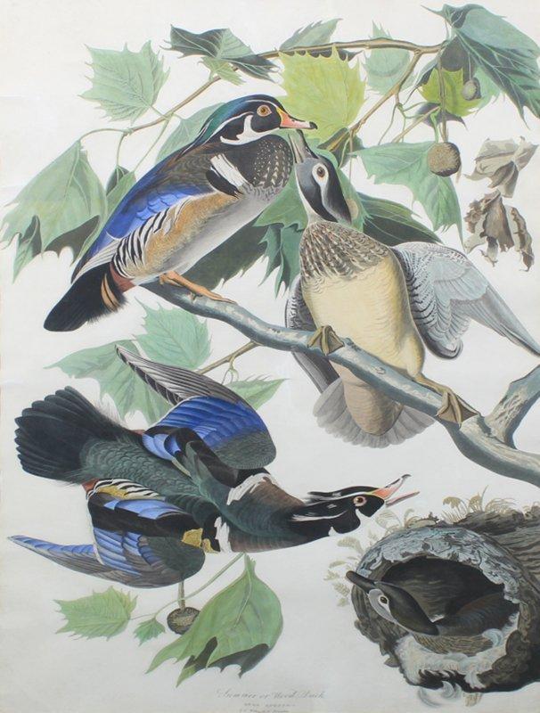 after John James Audubon (1785-1851) New York - 2