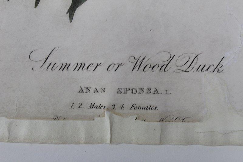 after John James Audubon (1785-1851) New York - 3