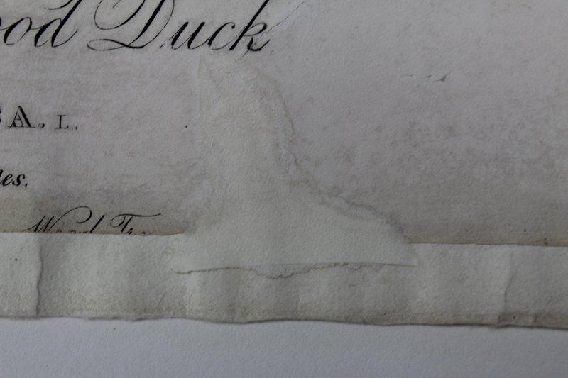 after John James Audubon (1785-1851) New York - 6