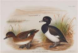 Baker (E.C. Stuart) - Indian Ducks and Their Allies,