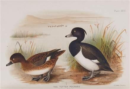 Baker (E.C. Stuart) - Indian Ducks and Their Allies,