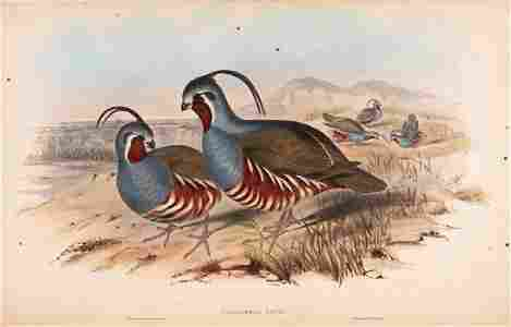 Gould (John) - A Monograph of the Odontophorinae, or