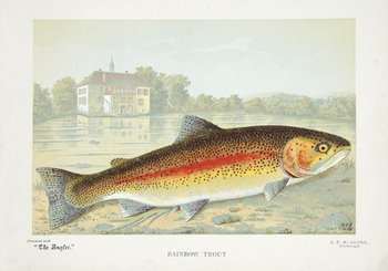 15A: Angler (The) [Plates of fishes]