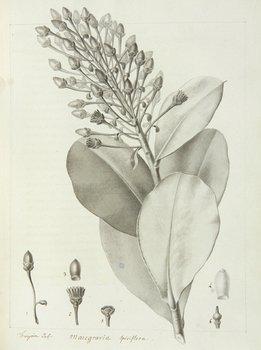 578C: Jussieu Memoirs de Botanique