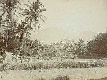 4D: Hawaiian Islands and California.- Album