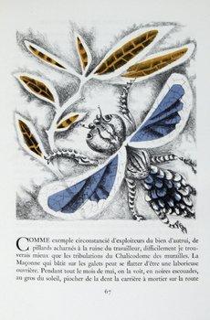 3C: Fabre Le Monde Merveilleux des Insectes