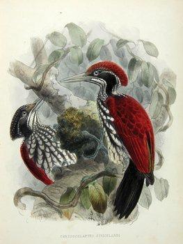 15C: Legge (Vincent) Birds of Ceylon