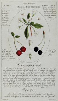 23C: A collection of botanical prints