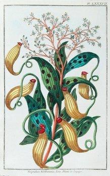 24C: Buc'hoz (Pierre Joseph) Herbier Colorié de l'Asie