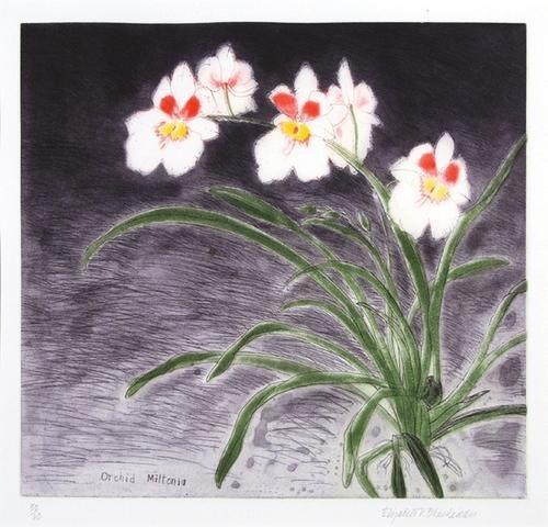 24B: (Dame Elizabeth Blackadder, orchid miltonia