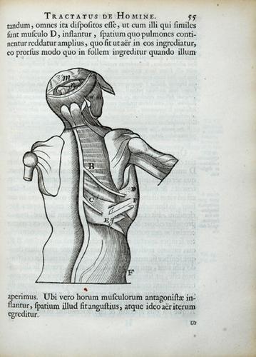 13B: Descartes. Tractatus de homine