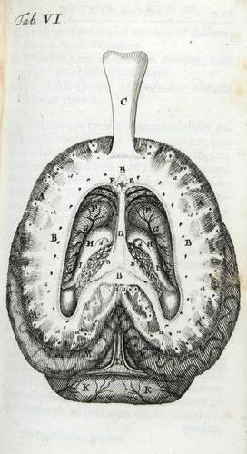 43B: Vieussens.Neurographia universalis,1690