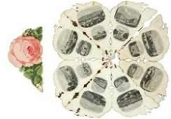 291D Joseph Myers  Co Bath souvenir rose
