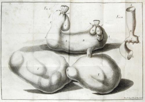 3A: Fantonus (Joannes) Medica et Physiologica