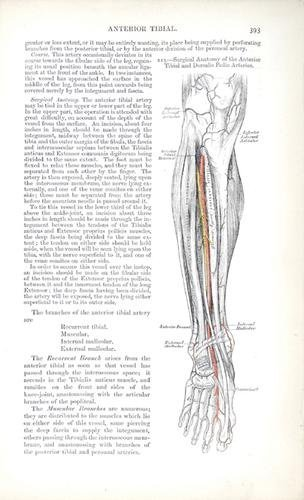4A: Gray (Henry) Anatomy Descriptive and Surgical