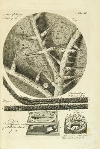 24C: Hooke (Robert) Micrographia Restaurata...