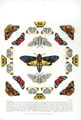 486C: Wilkes.Bowles's New Coll.Eng.Moths/Butterflies