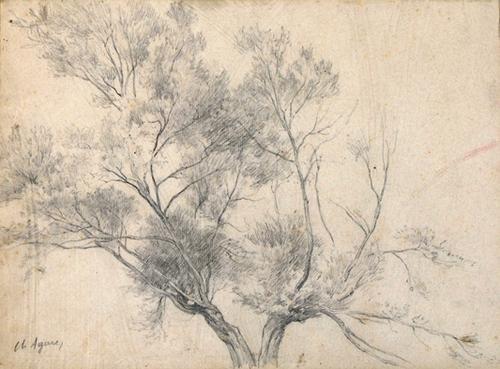 3D: Agard,  a pair of tree studies