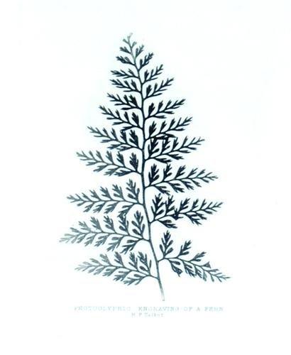 300C: William Henry Fox Talbot, fern, 1863