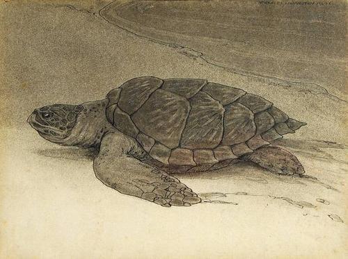 """42: Bull (Charles Livingston) """"Turtle on the Shore"""""""