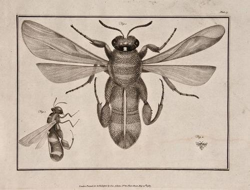 422: Adams (George) Essays on the Microscope; 1787