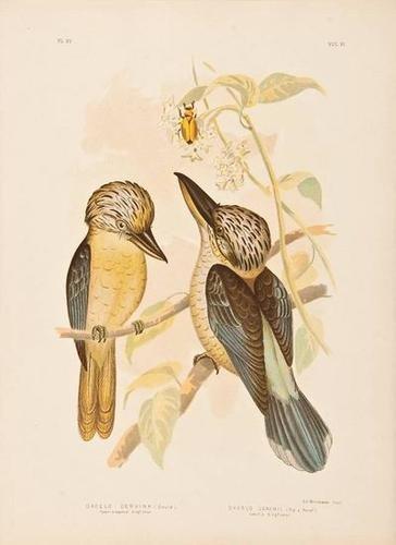 610: Broinowski (G.J.) [The Birds of Australia]