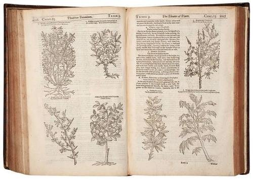 110: Parkinson (John) Theatrum Botanicum: