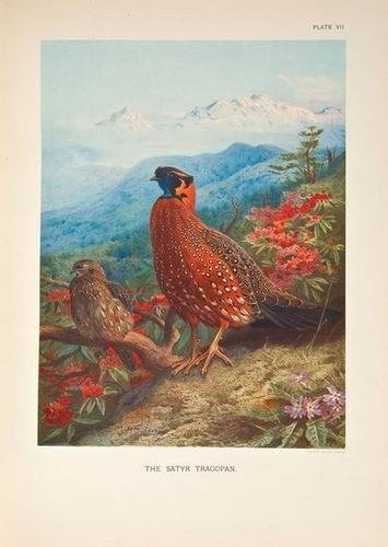 7: Beebe.Monograph of the Pheasants