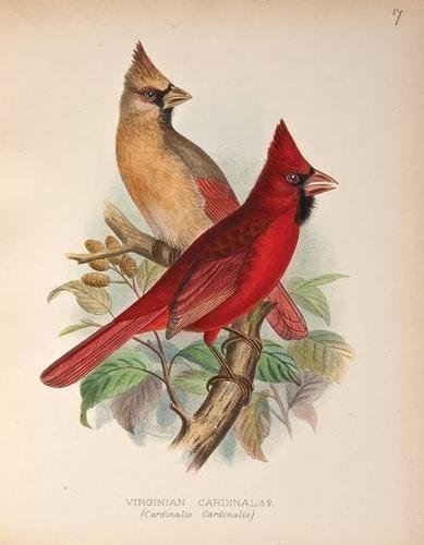 11: Butler.Foreign Finches in Captivity,1894