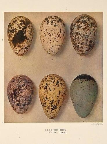 22: Dresser.Eggs of the Birds of Europe
