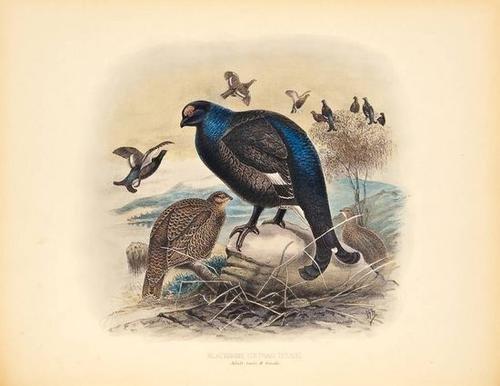 43: Millais.Game Birds and Shooting-Sketches