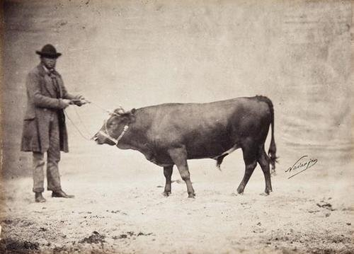 2: Adrien Tournachon (Nadar Jeune) (1825 - 1903) Stud