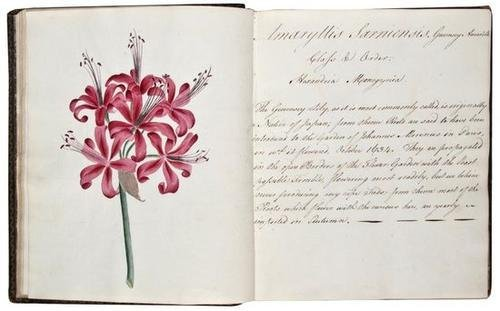 20: C., M. A collection of botanical drawings. MC del[