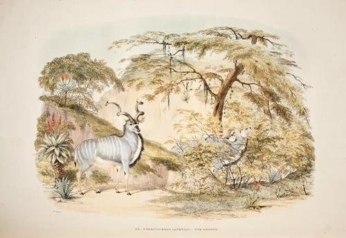 16: Harris Game Wild Animals of Southern Africa
