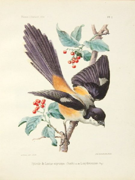 16A: 6 hand-coloured lithographed plates by A.Millot,