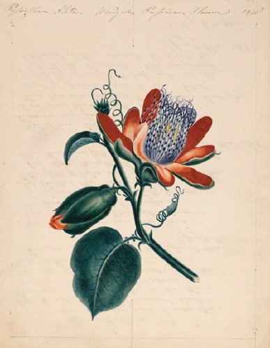 7B: Botanical.- by a variety of hands, many very skil