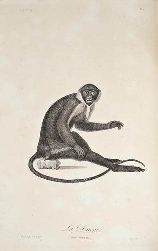 2: Audebert (Jean Baptiste) Histoire Naturelle des Si