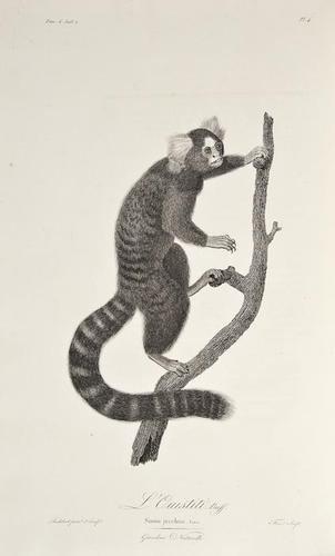 3: Audebert (Jean Baptiste) Histoire Naturelle des Si